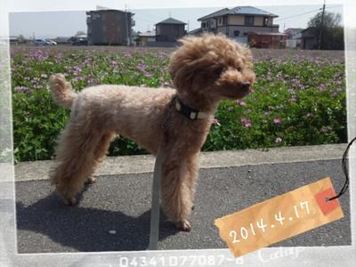 2014-04-17_11.10.50.jpg